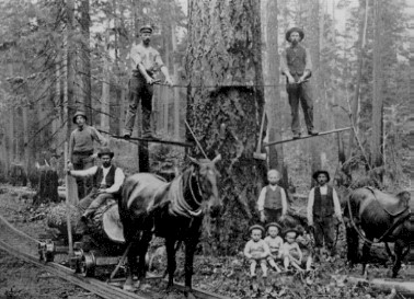 Clearing trees in Downtown Puyallup.  1889