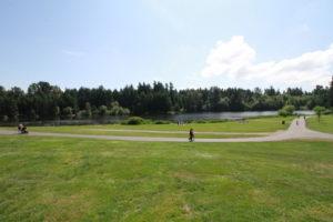 grass-area